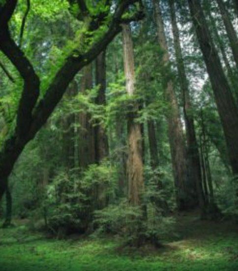 自然の法則と病気について