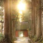 長野から愛を込めて♡ 戸隠神社( 奥社・九頭龍社)